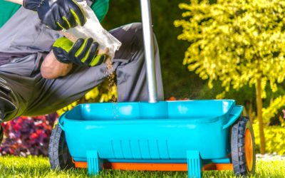 How to Properly Fertilize Your Lawn