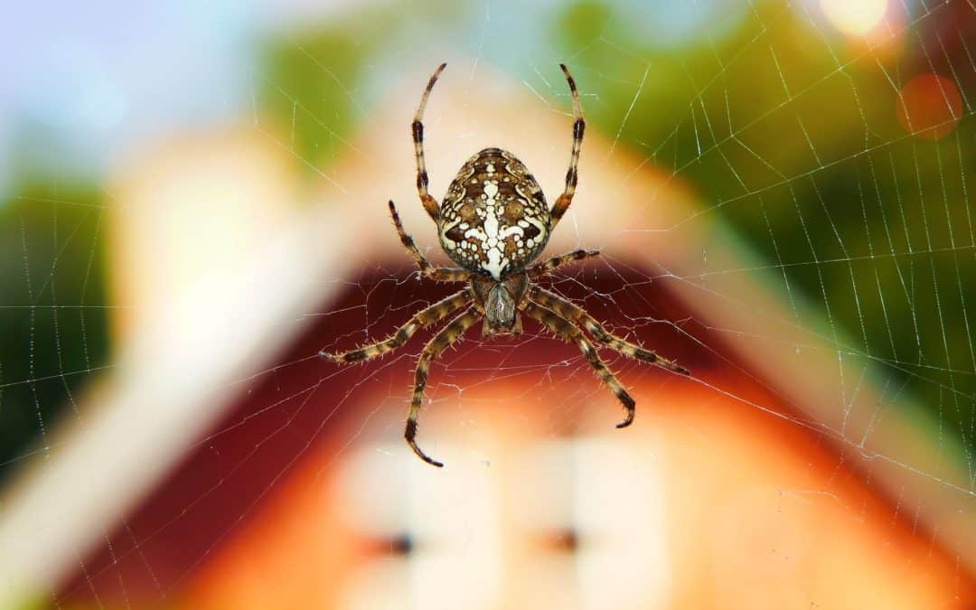 How to Get Rid of Spiders in Orem, UT