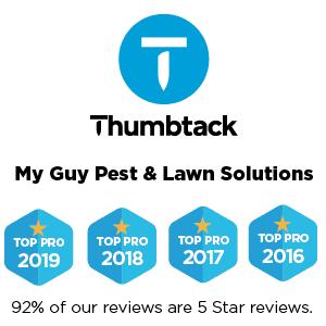 My Guy Thumbtack